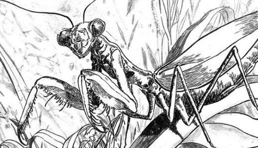 螳螂的墓地,被迫去心理咨询室的少女,她的漫画另类阴冷