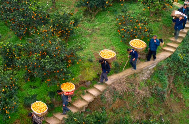 拼多多:將孵化500個農產品供應鏈品牌  ?