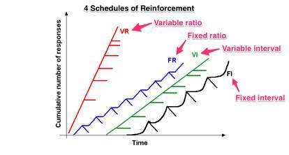 条件反射的原理是什么_条件反射的特征是啥